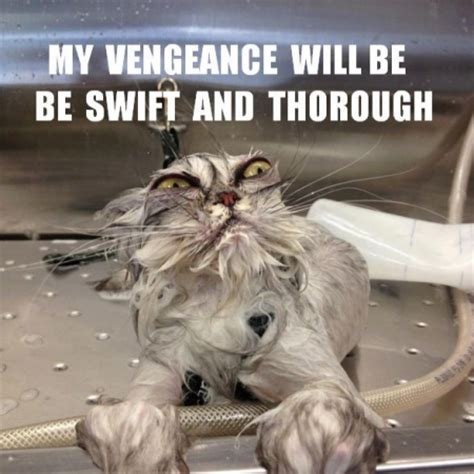 Best Angry Cat Meme - top 20 funniest angry cat memes