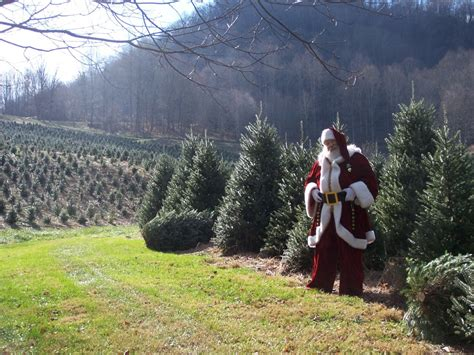 christmas tree farm in chicagoland area get in the spirit with a last minute trip to the nc mountains