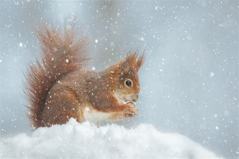 ways  protect  home  winter pests modern pest