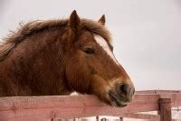 equines metabolisches syndrom ems beim pferd erkennen