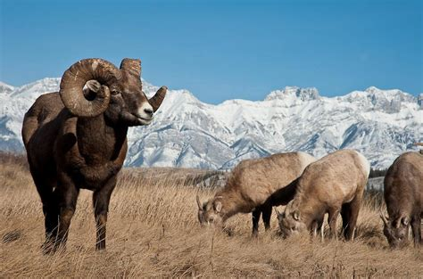 biggest animals kingdom april