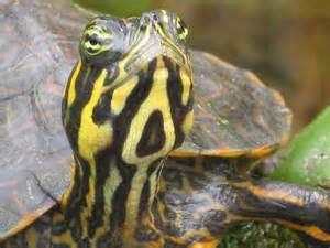 Frog Turtle Babies