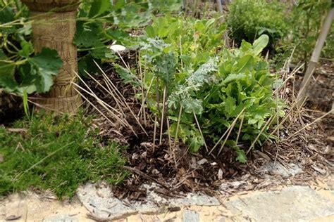 stop rabbits  eating  plants
