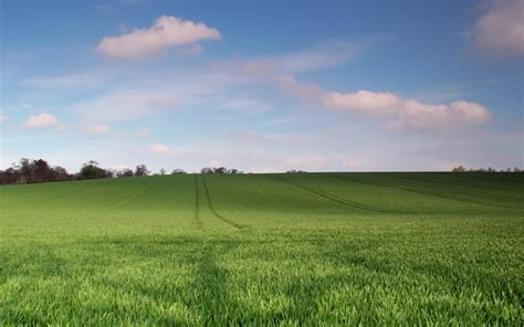 pasto verde trails arboles cielo fondos de pantalla