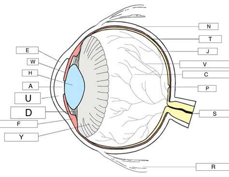 Label Eye Diagram Ks2 by Printables Of The Human Eye Worksheet Ks2 Geotwitter