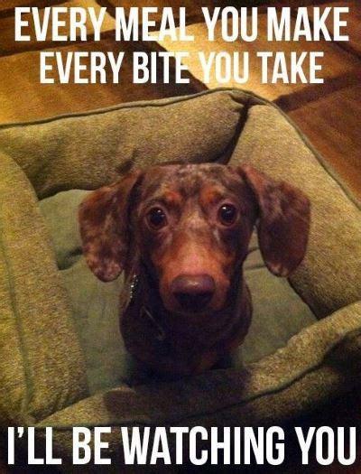 Weiner Dog Meme - the best dachshund memes ever