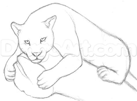 draw  jaguar step  step drawing sheets added