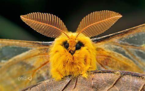 animals wildlife moths nature wallpapers hd desktop