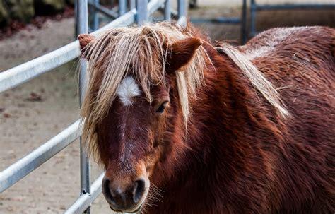 einsatzmoeglichkeiten von weidepanels pferdesachen