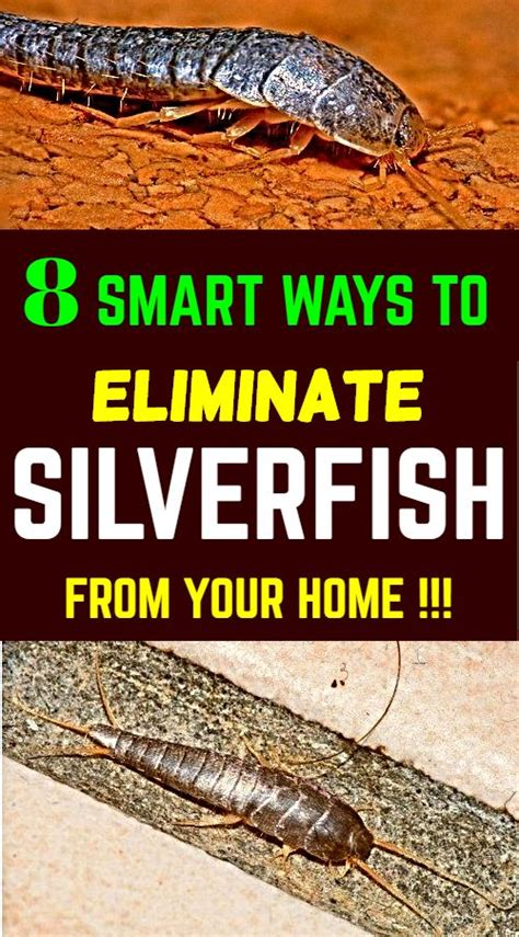 How To Get Rid Of Fishmoths In Cupboards silverfish or fish moths are mostly found in laundry rooms