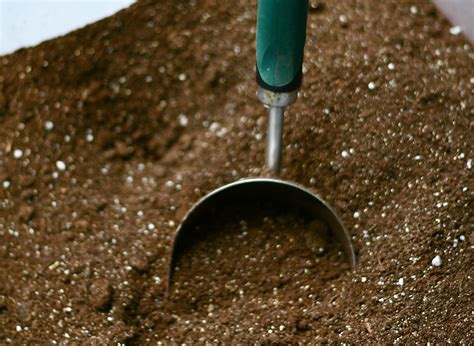 soilless potting mix what s so great about soilless potting mix
