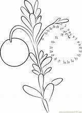 Cranberry Worksheet Dot Pages Template Plant Dots Connect Coloring Sauce Printable sketch template