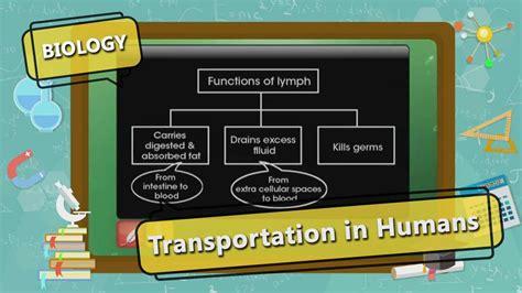 transportation  human transportation  humantopic