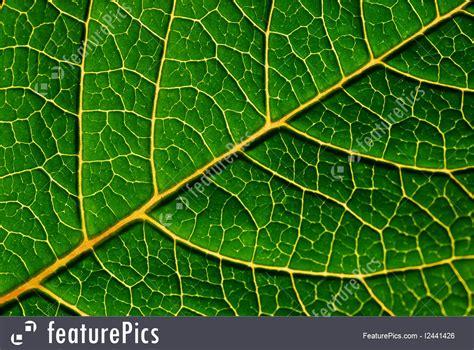 green leaf detail photo