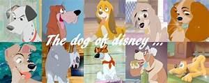 disney dogs photo