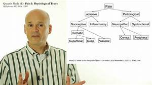 Pain 1  Physiological Types Of Pain