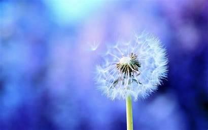 Healing Backgrounds Health Mental Wallpapersafari Dandelion