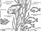 Kelp Forest Coloring Friends Getcolorings Printable sketch template