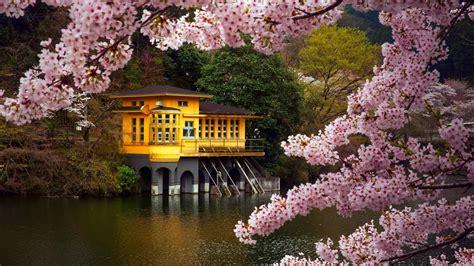 spring  japan wallpapers hd   pixelstalknet