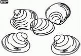 Coloring Pages Shells Clam Clams Rocks Sea Animal Printable Mussels Animals Oncoloring sketch template