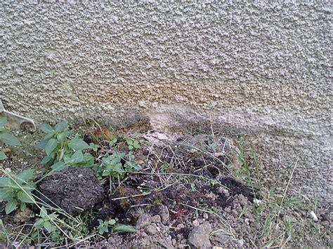 probleme humidité chambre problème humidité murs crépis s 39 effrite