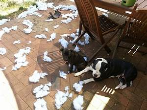 13 adorably destructive dogs who are quotsorry not sorry With dog beds for destructive dogs