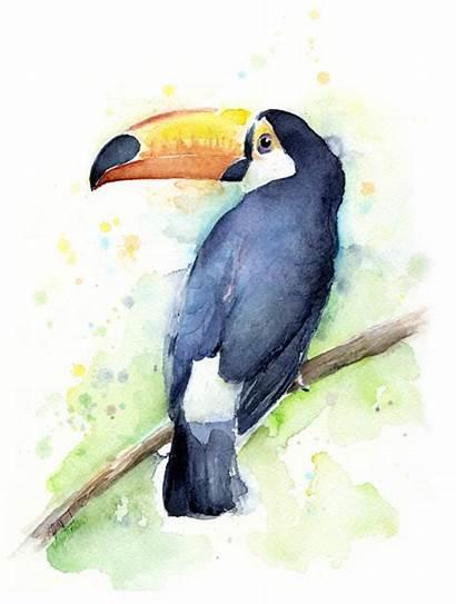 Toucan Watercolor Bird Animals Tropical Olga Shvartsur