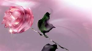 Gorgeous, Rose, Flower Wallpapers, Nature Images, Plants ...