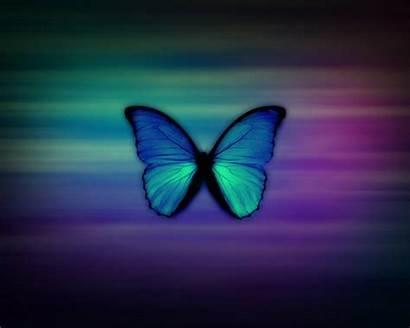 Purple Wallpapers Teal Resolution Background Butterfly Desktop