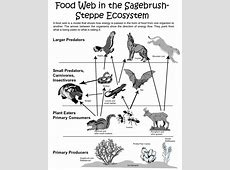 Food Chain Website Wiring Diagram Fuse Box