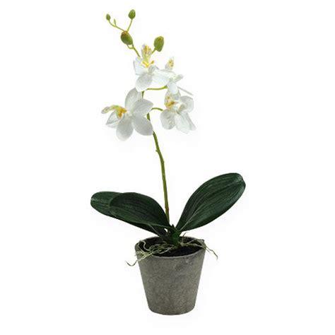 kaffeesatz als dünger für orchideen orchidee im topf wei 223 26cm kaufen in schweiz