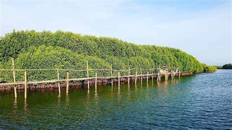 lokasi  tiket masuk hutan mangrove pantai congot kulon