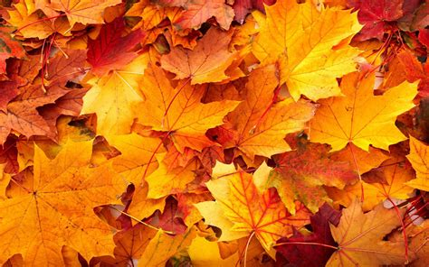 Aesthetic High Resolution Fall Backgrounds by 42 Autumn Backgrounds 183 Free Stunning Hd