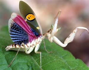 Praying Mantis - Devout, Stealth, Fearsome Hunter | Animal ...