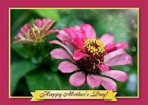 Mothers Day Flower Cards – Art Photo Web Studio