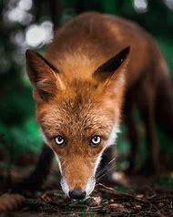 Wildlife Forest Animals