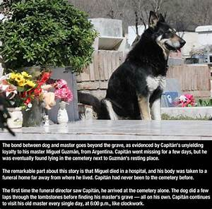 Dogs are the most faithful animals essay