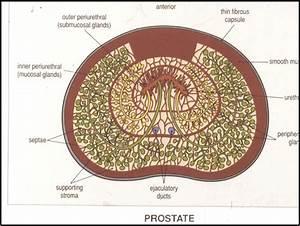 Wk 6 Prostate
