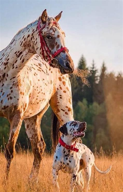 friends horse dog horses dogs awesome friendship together baby cute pic matching dalmatian related re spotted amigos too anyone equine