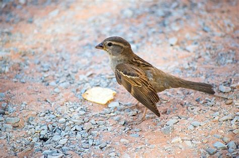 bird on ground public domain free photos for download