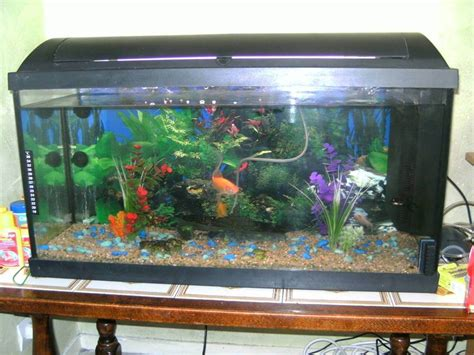 question sur taille de l aquarium forum poisson