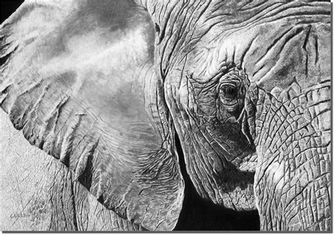 Elephant Art Print By Dean Crouser Arts Jobs Cleveland Art Of Living Goenka Line Lion Head Galleries Falmouth Music And Atelier Qatar Word Meaning In Hindi Concept Online Body Ryan Daniel Beck