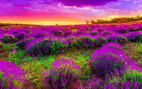 Beautiful Sky And Spring Landscape  Hd Wallpapers