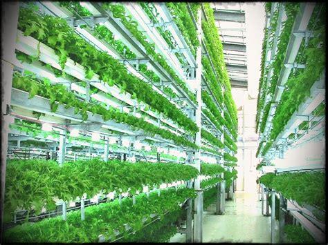 Diy Vertical Garden Indoor Vegetable Watering System