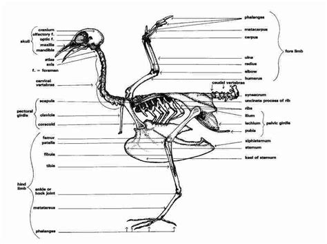 diagrams poultry parts charts and lots of reading updated