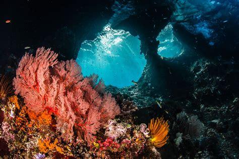 raja at diving information scuba diving resource - Raja At Dive