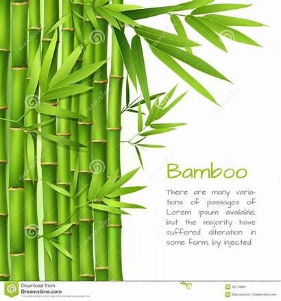 Bamboo Realistic Background Vector Tree Japanese Plant
