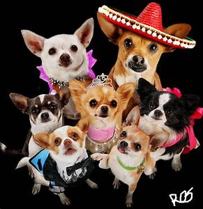 beverly hills chihuahua by lcgyzma1 on DeviantArt