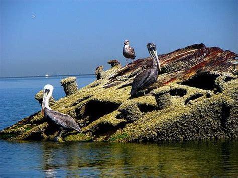 shipwreck  destroyer uss thompson dd   san