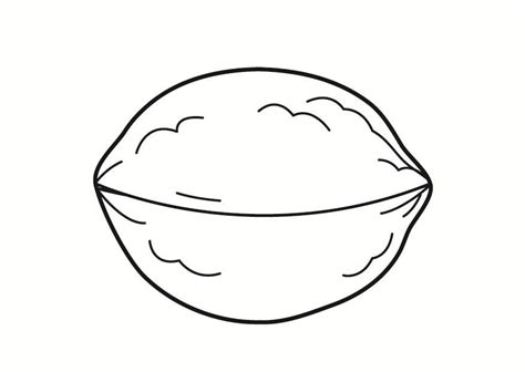 coloring page nut  printable coloring pages img